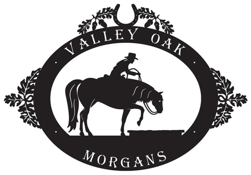Valley Oak Morgans